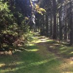 Hiking in the Schwarzwald